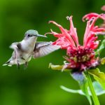 8 Flowers That Attract Hummingbirds