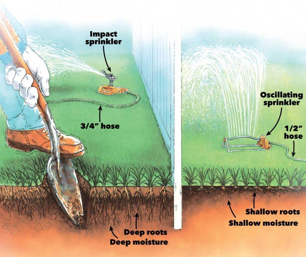 healthy lawn sprinklers