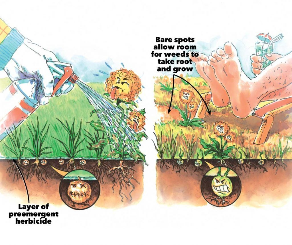 healthy lawn fertilizers