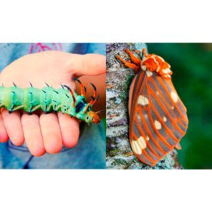 8 Crazy Cool Caterpillars You Could Find in Your Backyard
