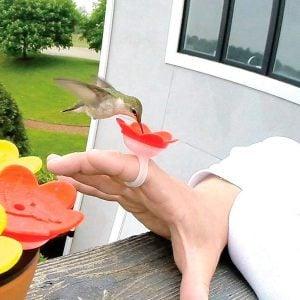 The Ultimate Bucket List for Hummingbird Lovers