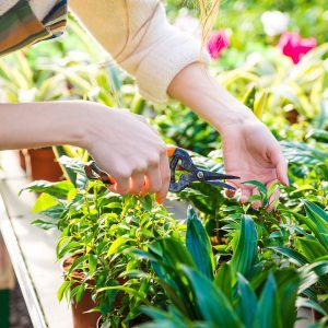 13 Ways to Take Your Garden From Good to Great