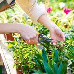 10 Tips to Create an Affordable Garden