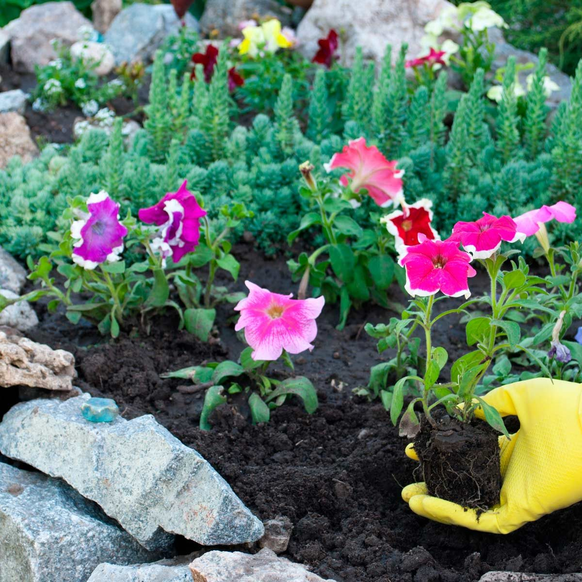 How To Use Flower Bed Stones In Your Landscape Family Handyman