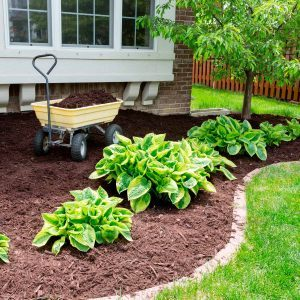 Cheap Curb Appeal Landscaping Ideas You Can DIY