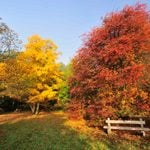 Turn Your Fall Leaves into Free Mulch and Compost
