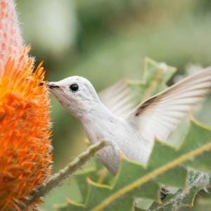 Top 10 Travel Hotspots to See Hummingbirds