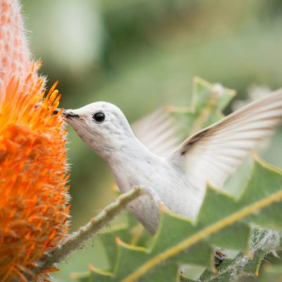 Top 10 Travel Hotspots to See Hummingbirds