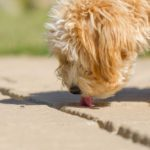 How to Get Rid of Ants When You Have a Dog or Cat in the House