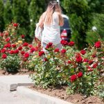 10 Things to Consider When Hellstrip Gardening