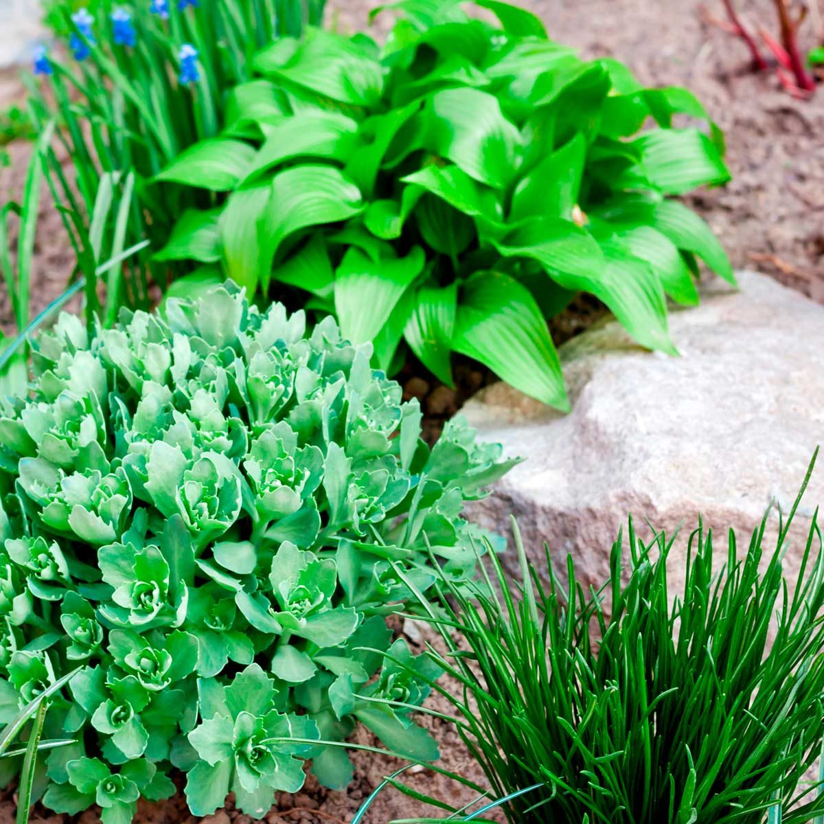 10 Tips to Create an Affordable Garden
