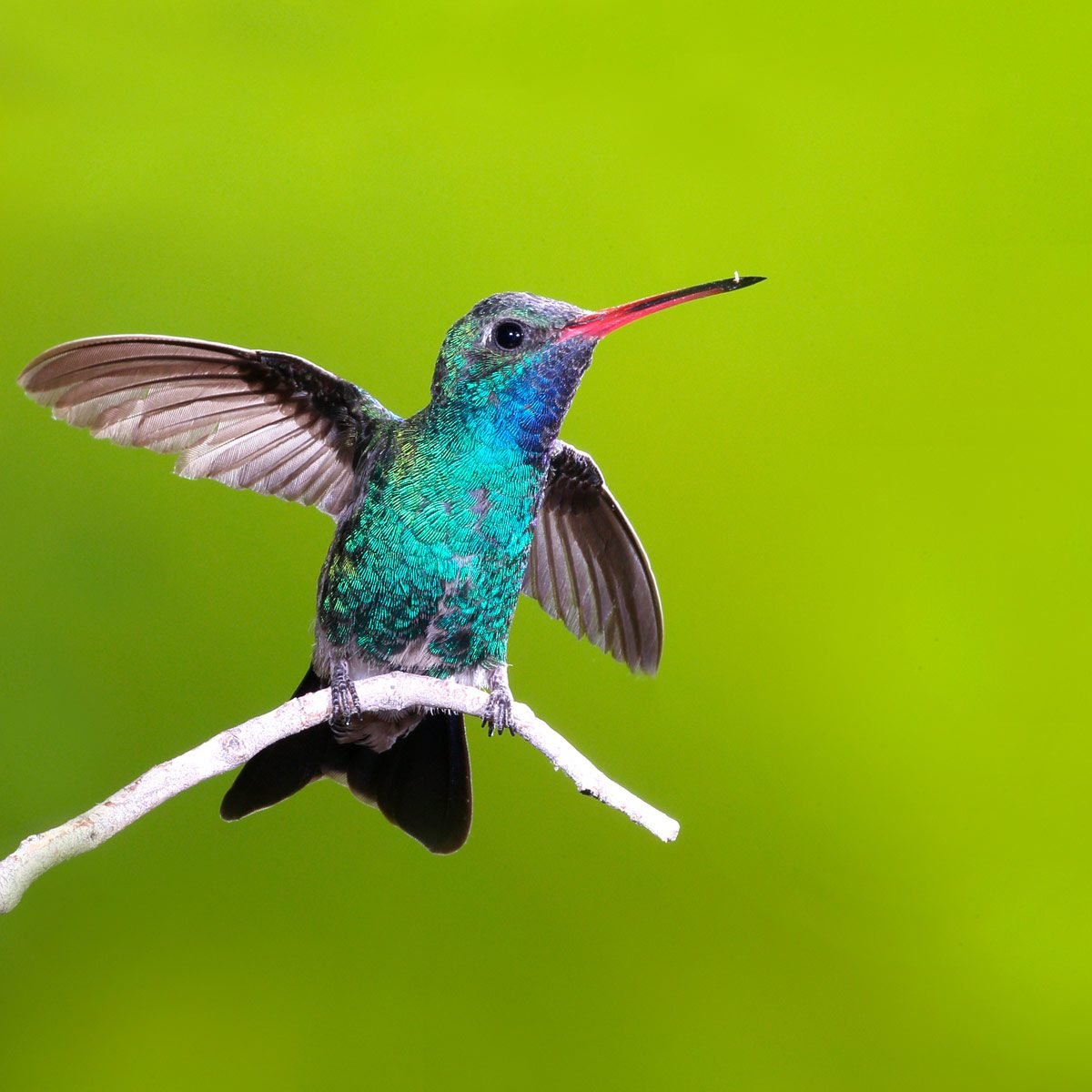 10 Incredible Hummingbird Species You Could See in Your ...