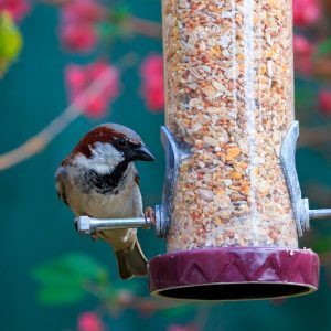 Should You Take Down Your Bird Feeder in the Summer?