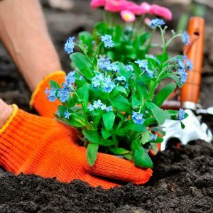 Low-Maintenance Flower Bed Tips