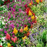 Our Favorite Flower Bed Ideas for Full Sun