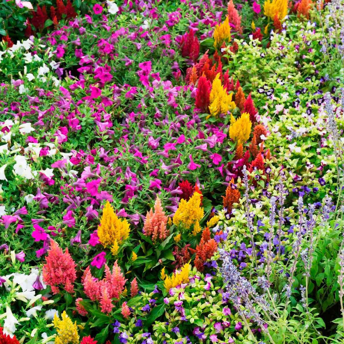 Our Favorite Flower Bed Ideas For Full Sun Family Handyman