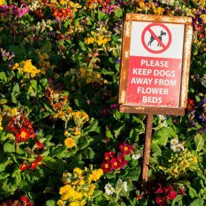 Smart Tips for How to Keep Dogs Out of Flower Beds