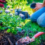 Pros and Cons of Flower Bed Mulch