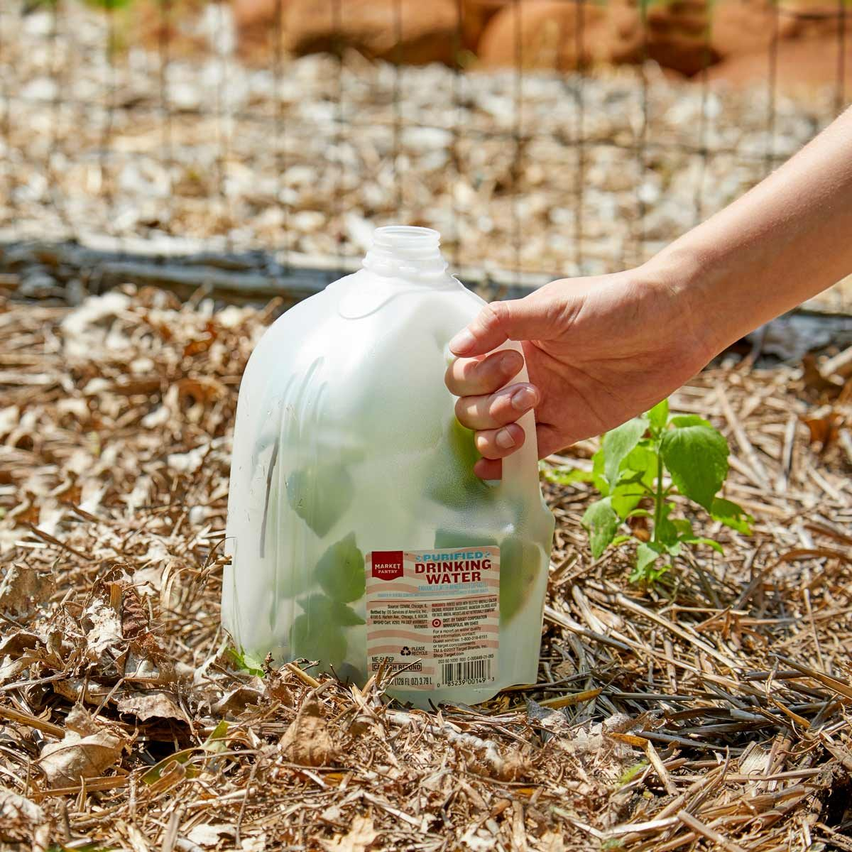 HH milk jug plant protector