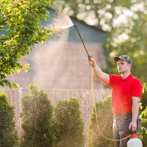 15 Tips to Combat Mosquitoes in Your Yard