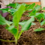 Plant Your Fall and Winter Vegetables Right Now