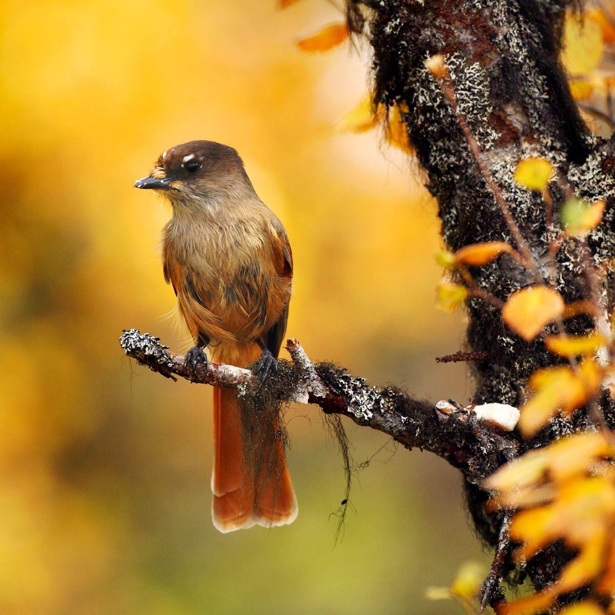 Fall Backyard Birding Checklist Tips To Attract More