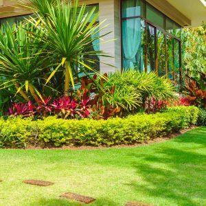 Fall Lawn Care: Keep a Healthy Yard Through Winter