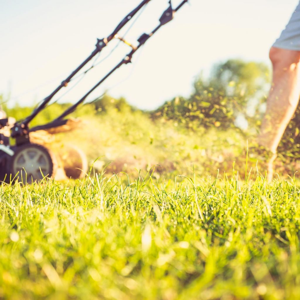 How To Achieve A Healthy Lawn The