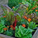 How to Transition Flower Pots From Summer to Fall
