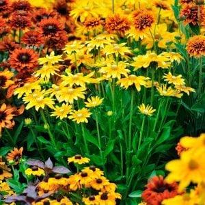 10 Tips for a Fabulous Fall Flower Garden