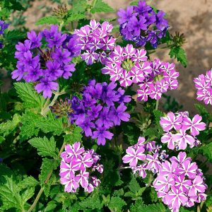 10 Pretty Purple Flowers That'll Make Your Garden Pop