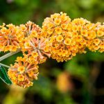 10 Yellow Flowers We're Crazy About
