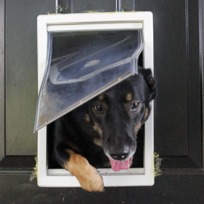How Doggy Doors Are Making Your Home Vulnerable