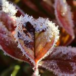 Protect Your Plants from Frost During a Cold Snap