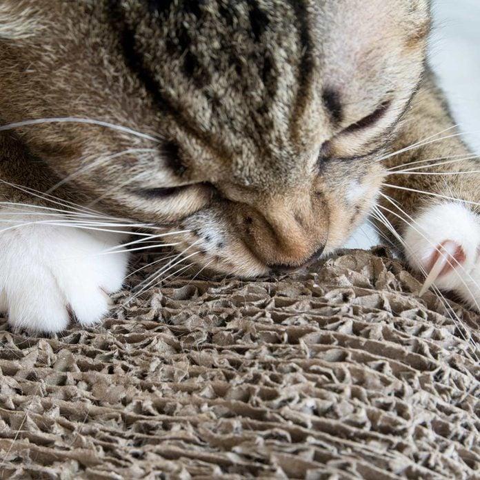 cat scratching cardboard