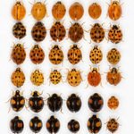 The Most Annoying Fall Pests and How to Manage Them