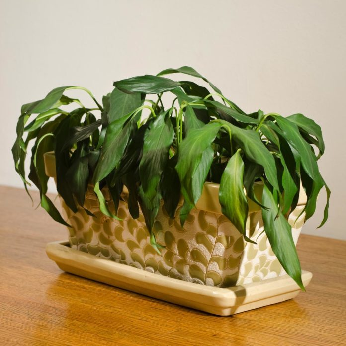 How to Save a Houseplant on the Brink