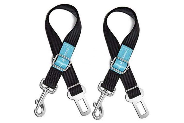 07_Dog-seat-belt