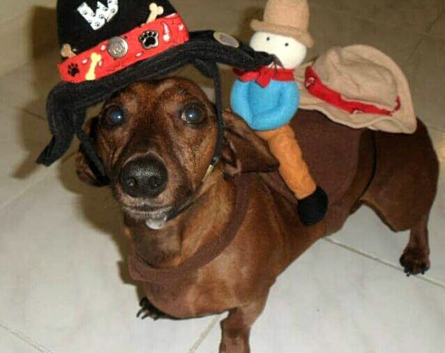Dog dressed in hat