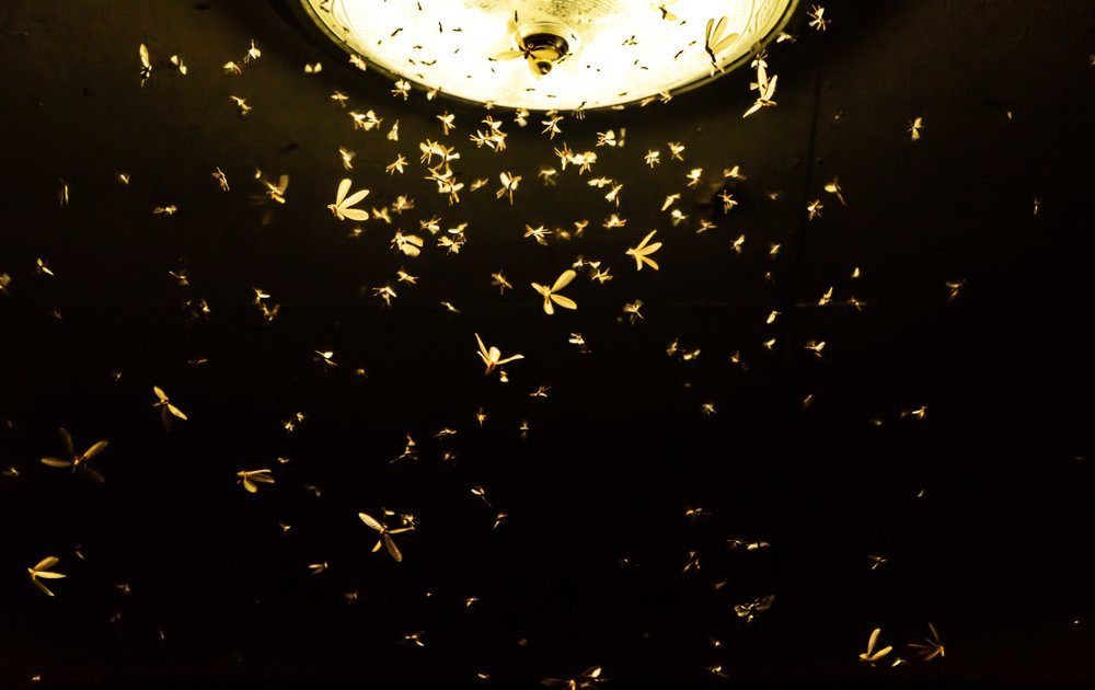Moths are flying to find the light from neon lights at night.