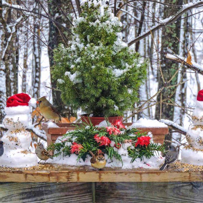 christmas tree bird feeder