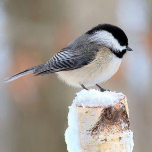 Creature Comfort: Helping Animals Survive Winter