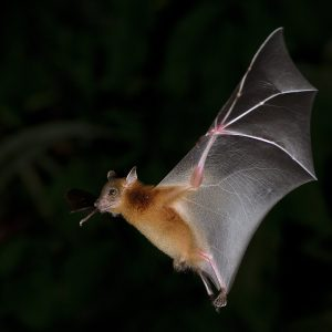 6 Surprising Facts About Bats