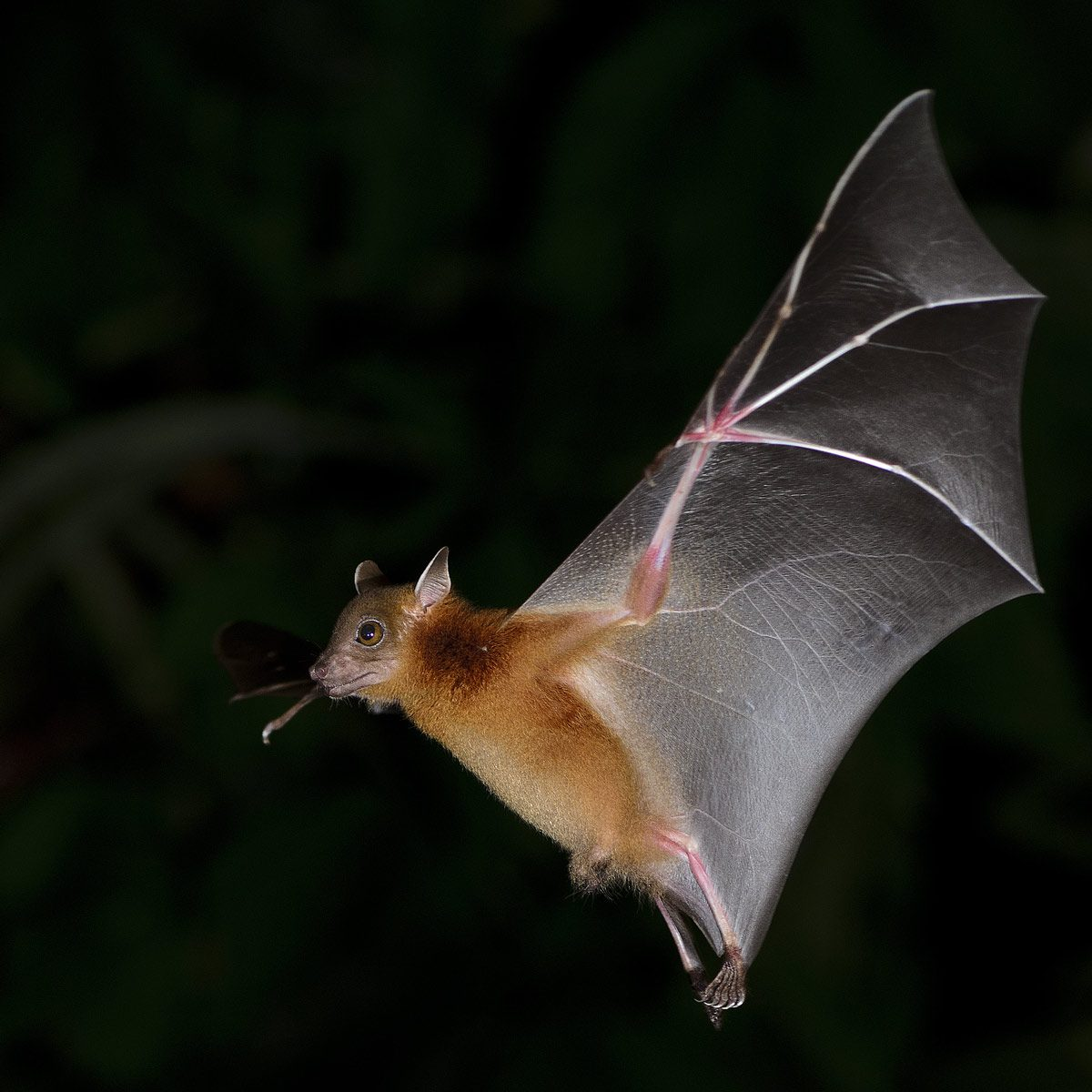 6 Surprising Facts About Bats The