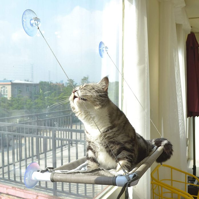 cat perch