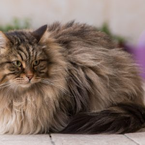 DIY Cat and Dog Grooming You Can Do At Home
