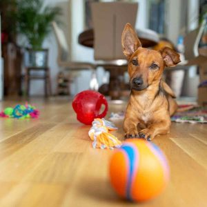 The 14 Best Puzzle Toys for Bored Dogs