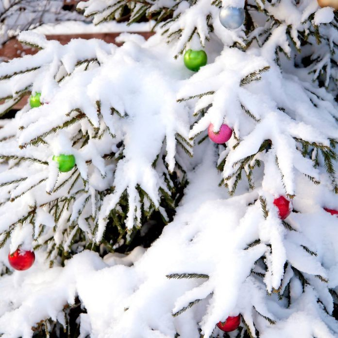 How to Protect Shrubs From Heavy Snow