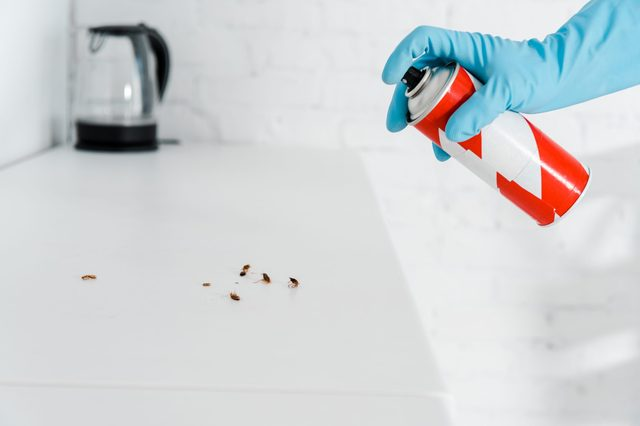 cropped view of exterminator in latex glove holding toxic spray can near cockroaches