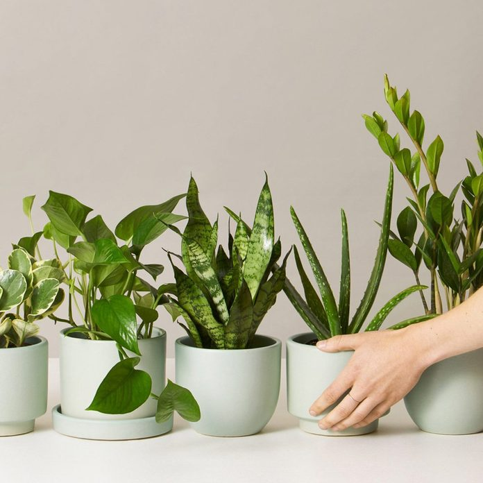The-Sill-plant